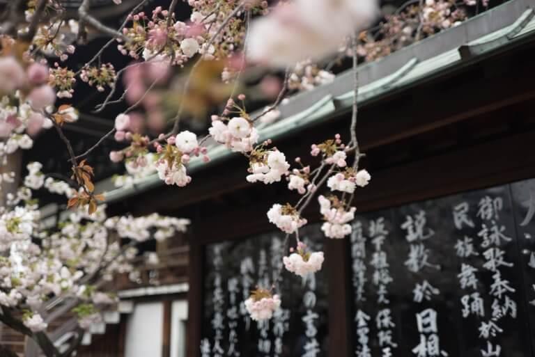 外国人観光客の方にも人気な日本の桜。名古屋の名所もご紹介しちゃいます!